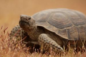 Curious Tortoise