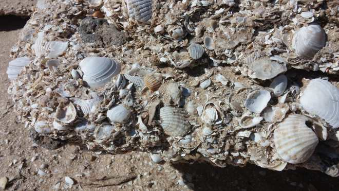 Countless seashells that make up the rocky beach