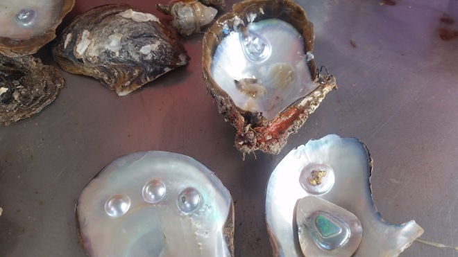 Oyster shells with anchor shape (top) , gold & opal (bottom right)