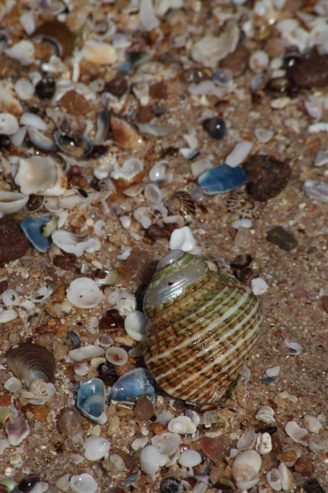 Shells galore