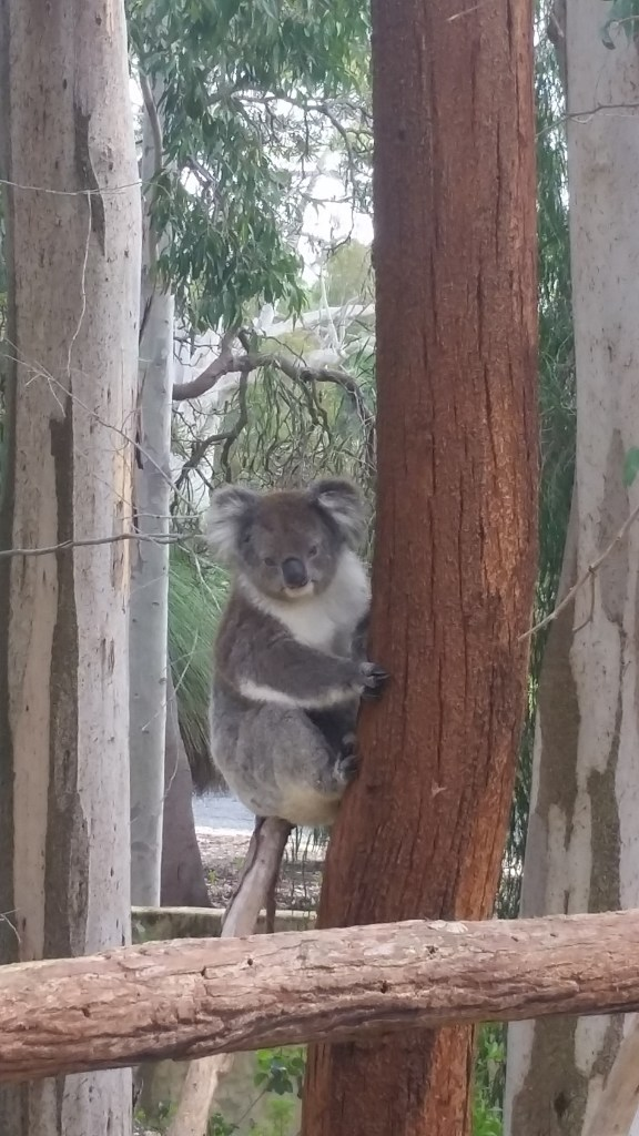 Deadly drop bear