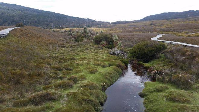 Mossy plain